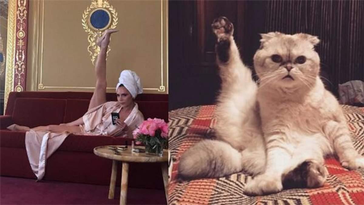 Кішка Тейлор Свіфт взяла участь у флешмобі Вікторії Бекхем: курйозне фото
