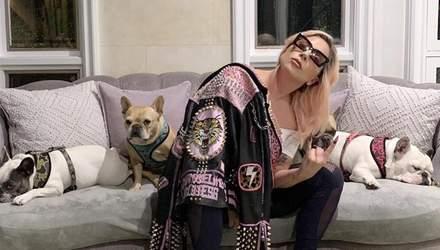 Невідомі вкрали собак Леді Гаги та підстрелили помічника співачки