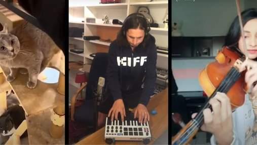 Мем з котом перетворили на вірусний трек: неймовірне відео