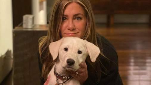 Поки інші купують, вони дають другий шанс: знаменитості, які взяли у сім'ї безпритульних тварин